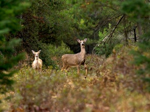 No, Hunting Whitetails from the Ground (Without a Blind) Is Not a Lost Art