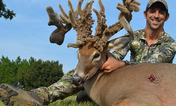 This Georgia Buck Never Shed Its Antlers. It Grew Into a Velvet Giant