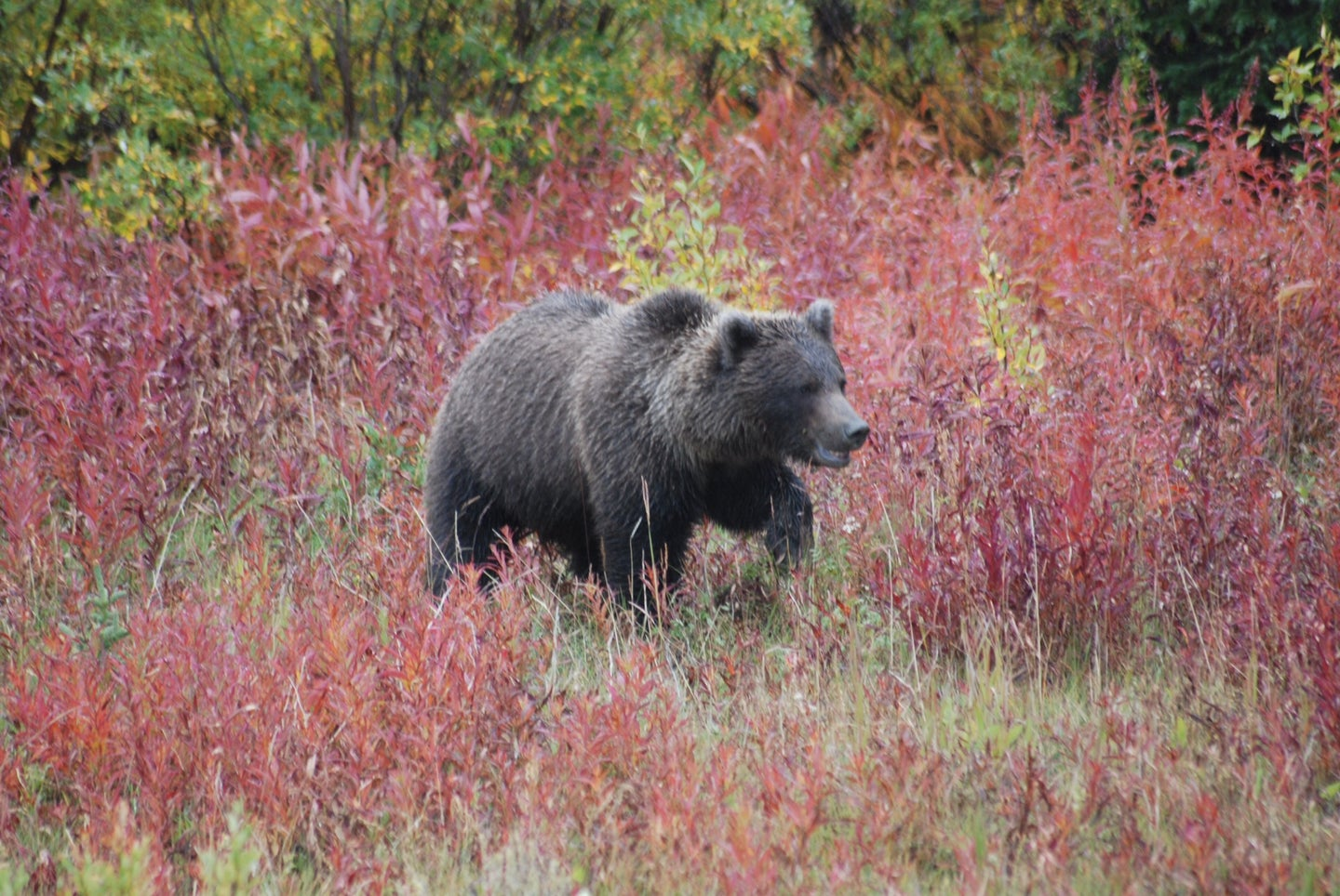 A grizzly sow charged two hunters in Idaho.
