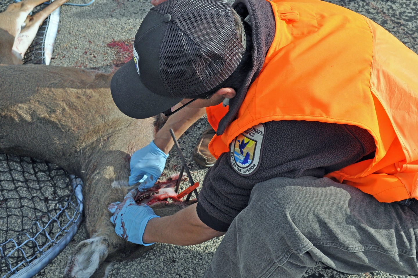 A CWD outbreak that originated at a deer farm in Wisconsin is causing big problems for managers.