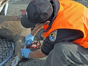A CWD Outbreak at a Captive Deer Farm in Wisconsin Is Creating Problems in 7 States