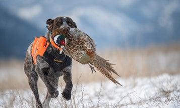 2021 Pheasant Hunting Forecast