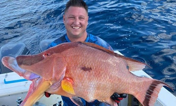 A Florida Spear Fisherman Set the State Hogfish Record with a 21.7-Pound Giant