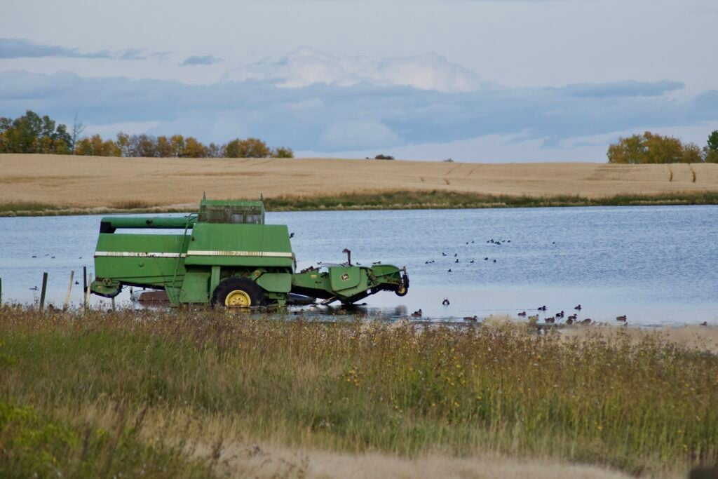 Check out larger wetlands if you want to shoot divers.