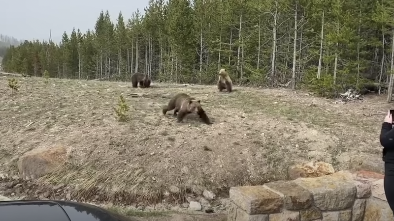 Two Women Face Jail Time and Steep Fines in Separate Bear Harassment Incidents