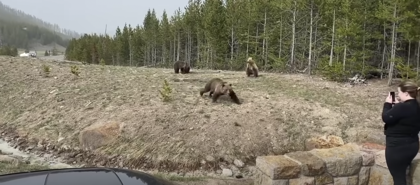 Samantha Dearing will spend four days in jail after a sow grizzly charged her.
