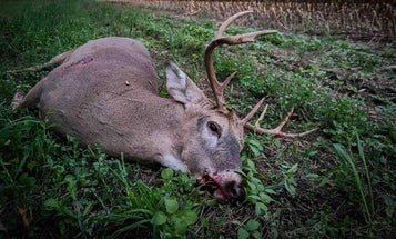 The Best Time to Deer Hunt in Mid-October? When the Farmer Cuts the Corn