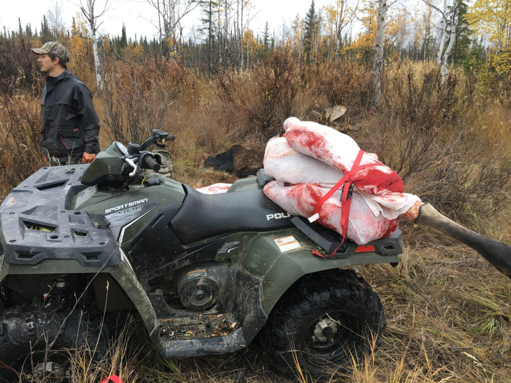 Use an ATV to get moose meat out of the backcountry.
