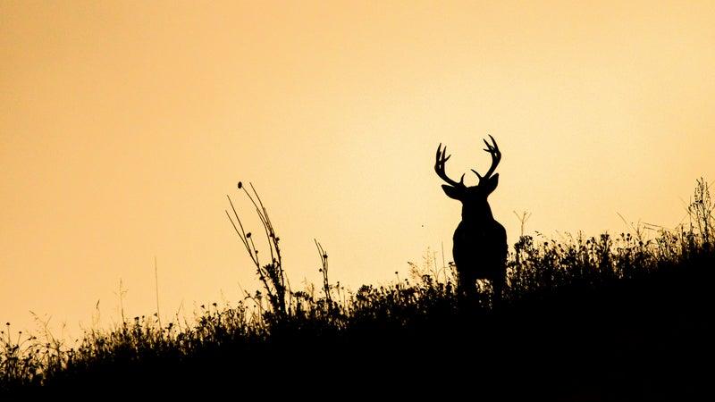 Best Deer Hunting Tips and Tactics for Halloween Week