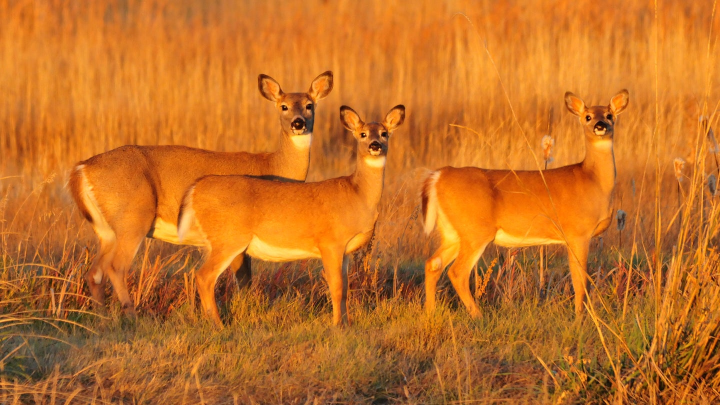 Hunting seasons are designed so that does who still have fawns with them may be tagged.